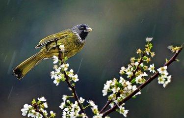 最近的一次人口普查_在最近的一项研究中欧洲山鸟的人口数据首次合并